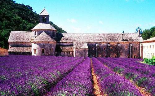 法国薰衣草庄园
